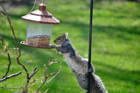 How do you keep squirrels off your bird feeder?