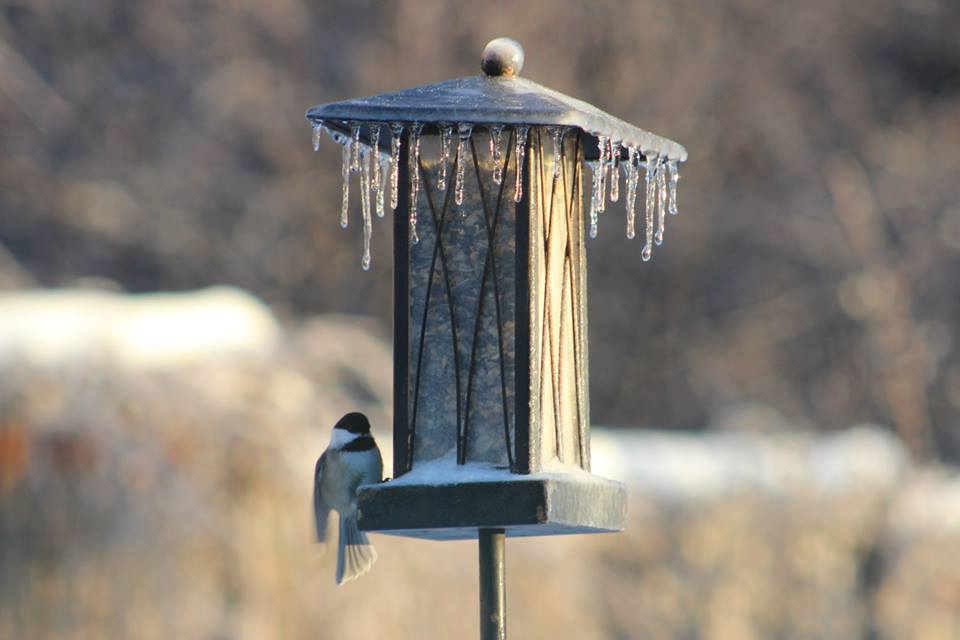 How do you attract birds in the winter?
