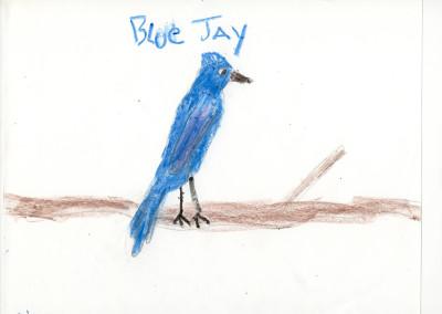 Nico - Blue Jay