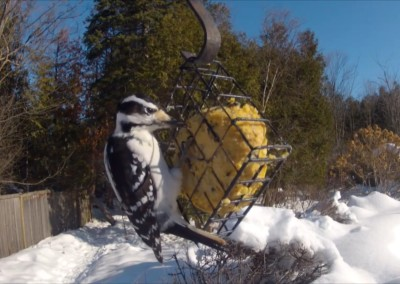 Webcam – Suet Ball