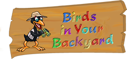 Birds In Your Backyard