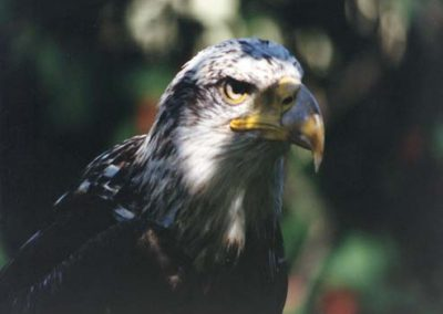 Conservation Halton's Mountsberg Raptor Centre