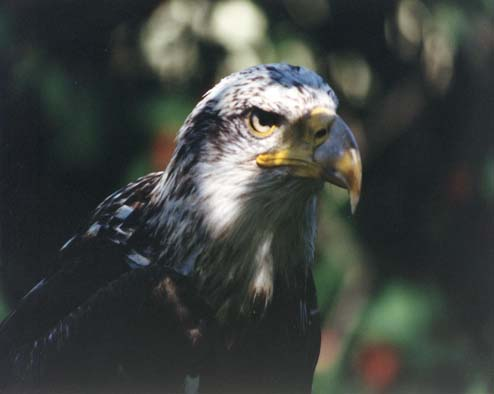 Conservation Halton's Mountsberg Raptor Centre