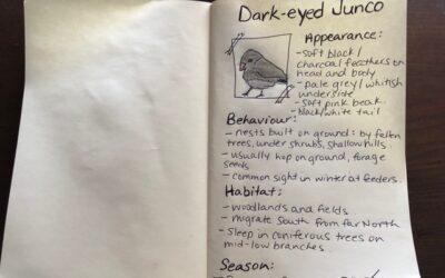 Dark-eyed Junco