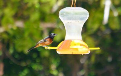 Identifying Bird Calls
